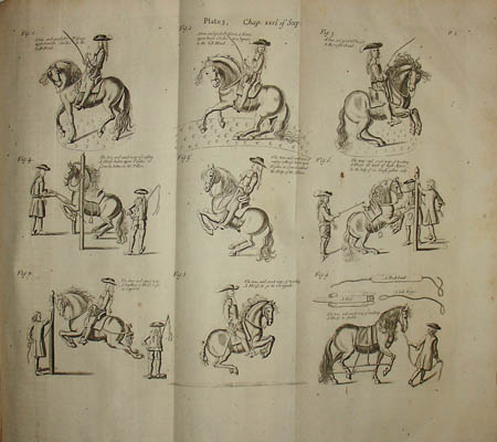 Dressage, full-size view of folding page