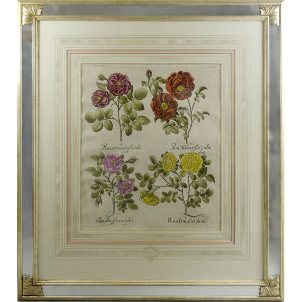 Besler Roses antique print, framed