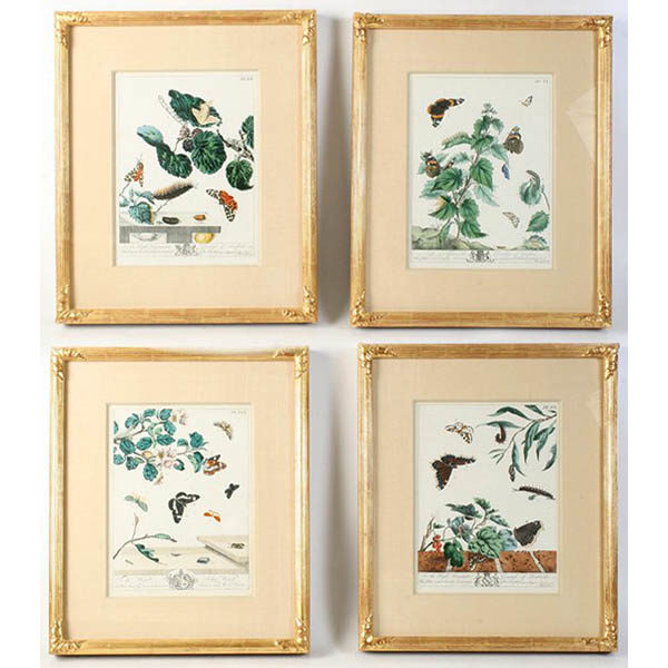 Moses Harris Framed Set of Butterfly and Moth Prints