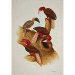 Sandstrom Watercolor of Hornbills