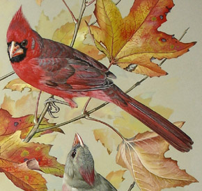 George Glazer Gallery Antique Bird Prints Basil Ede Cardinals On Maple Leaves