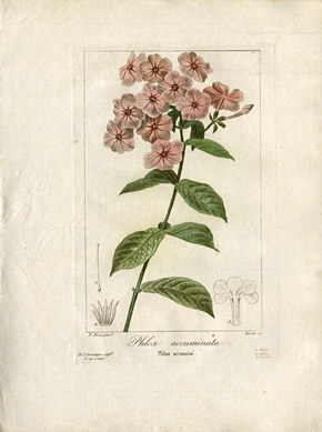 botanical prints botanical prints