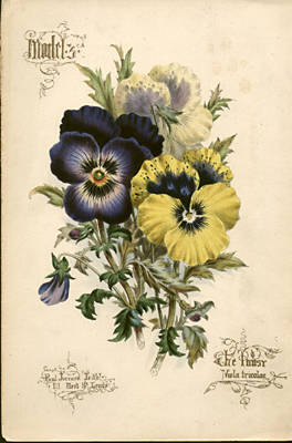 The George Glazer Gallery Antique Botanical Prints