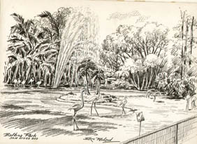 Balboa Park, San Diego Zoo [Flamingoes]