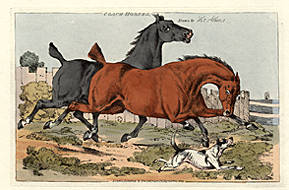 Coach Horses