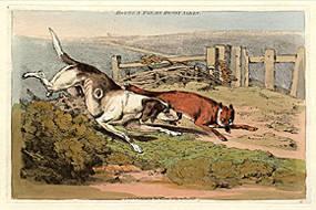Hound and Fox