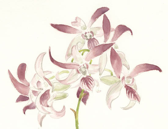 Study of Orchids