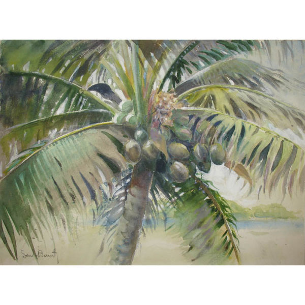 [Coconut Palm] watercolor by Sandor Bernath