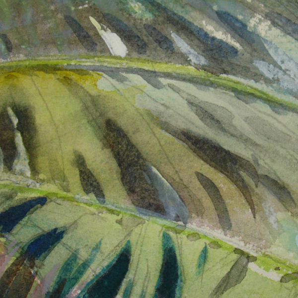 [Coconut Palm] watercolor by Sandor Bernath, detail