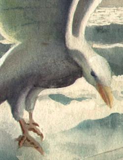 Seagull detail