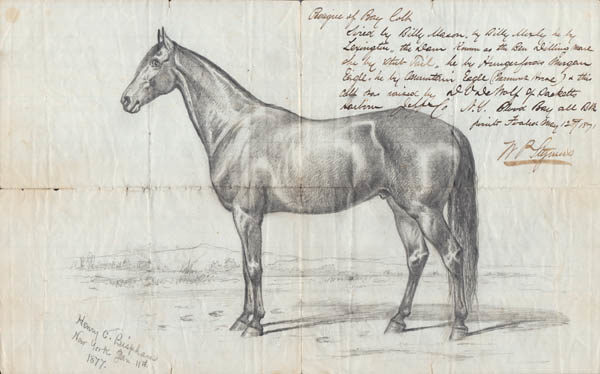 Sketch of Bay Colt and Letter to W.P. Stymus