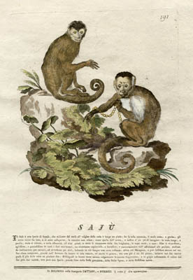 Natural History Studies of Monkeys