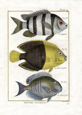 Fish Engravings