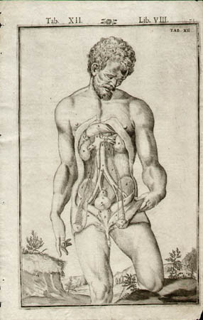 Bucretius anatomy - sold