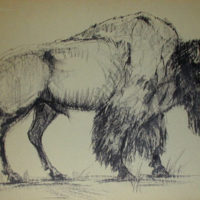 Two Drawings of Buffalo