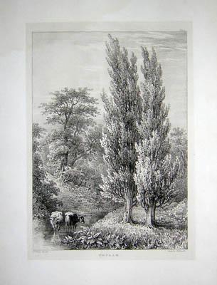 Poplar, Pl. 10
