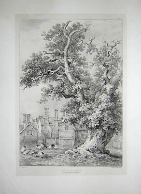 An Old Oak at Chenies, Hertfordshire, Pl. 11