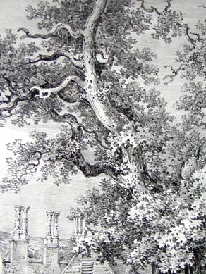An Old Oak at Chenies, Hertfordshire, Pl. 11, detail