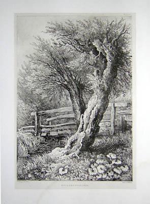 Pollard Willows, Pl. 12