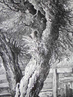 Pollard Willows, Pl. 12, detail