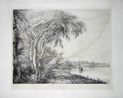 Abele Trees (White Poplar), Pl. 19