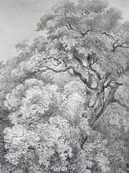 Cork Tree at the Bishops Palace, Fulham, Pl. 23, detail