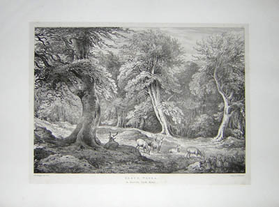 Beech Trees, in Knowle Park Kent, Pl. 24