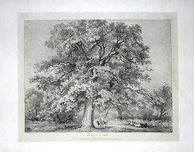 Queen Anns Tree, Windsor Forest, Pl. 25
