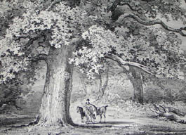 Queen Anns Tree, Windsor Forest, Pl. 25, detail