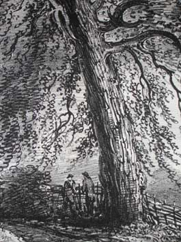 Black Poplar, Near Rofs. Herefordshire, Pl. 28, detail