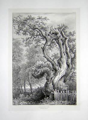 The King Oak, in Windsor Forest, Pl. 29