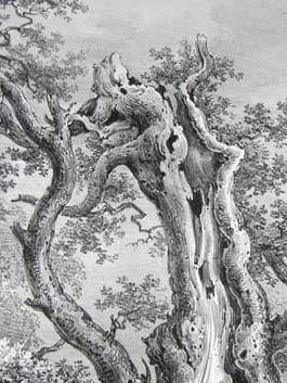The King Oak, in Windsor Forest, Pl. 29, detail