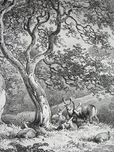 Thorn Trees in Bushy Park, Middlesex, Pl. 3, detail