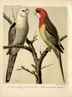 Cassell's Parrot Natural History Studies
