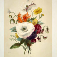 Elisa Honorine Champin Bouquets