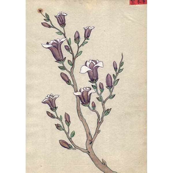 Chinese Export Botanical Painting, Branch with Buds