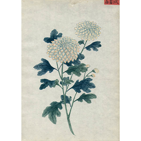 Chinese Export Botanical Painting, White Flowers
