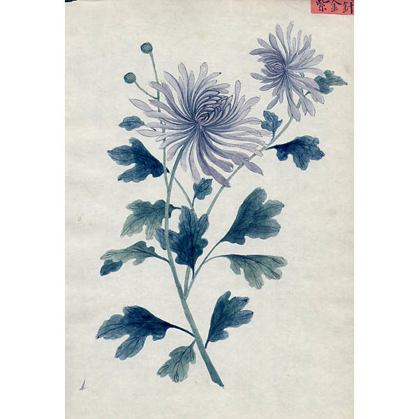 Chinese Export Botanical Painting, Blue Flowers