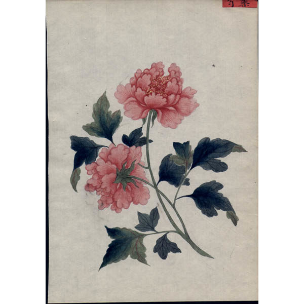 Chinese Export Botanical Painting, Roses