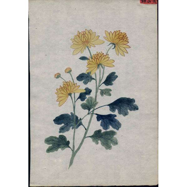 Chinese Export Botanical Painting, Yellow Flowers