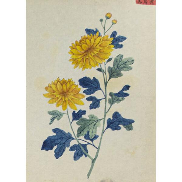 Chinese Export Botanical Painting