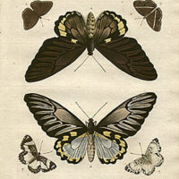 Studies of Exotic Butterflies