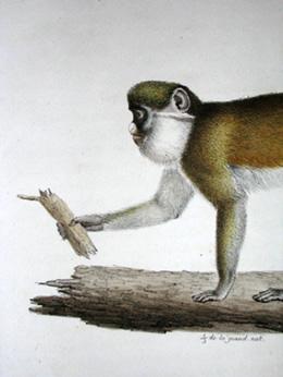 Ascagne Female, detail