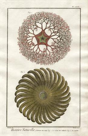 Plate 63