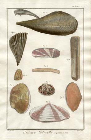Plate 71