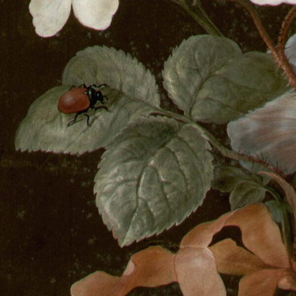 Jasmine, Rose, Blue Convolvulus, and Garden Beetle [No. 6], detail