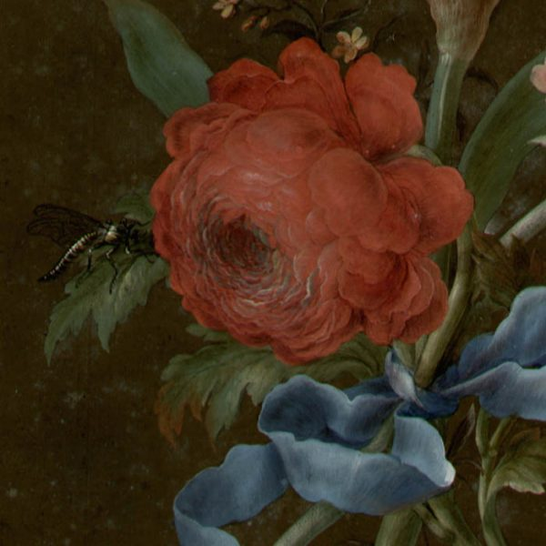 Narcissus, Rose, Auricula, and Dragon Fly [No. 5], detail
