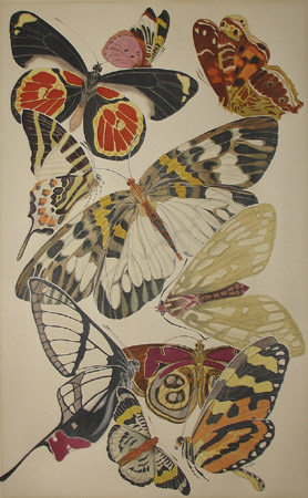 Butterflies in the Manner of E.A. Séguy