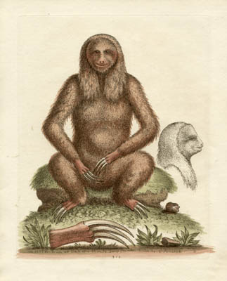 The Sloth, Plate 310