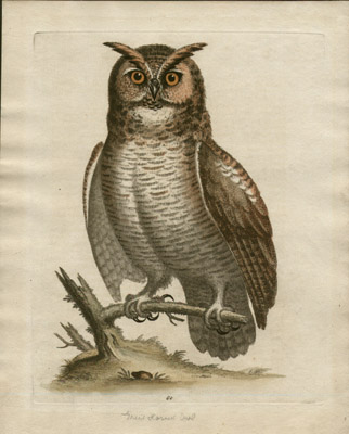 The Great Horned Owl, Plate 60